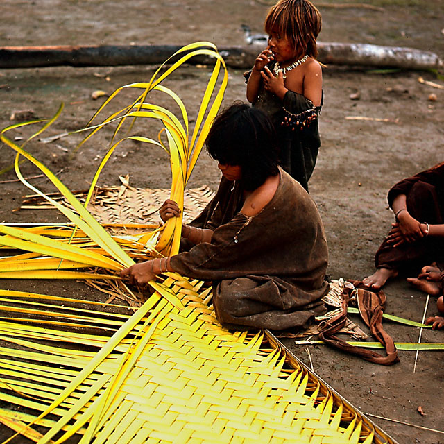 Ashaninka Girl Weaving Palm Leaves