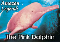 Amazon Legends | The Pink Dolphin